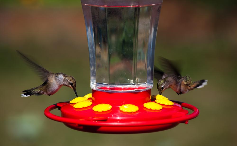 Hovering Hummingbirds